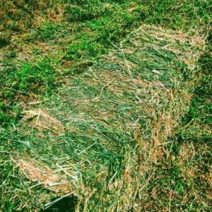 first_cutting _alfalfa_2016